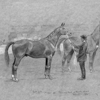 Thoroughbred and Hunter Show, Islington, 1914