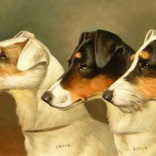 Portrait of Three Terriers