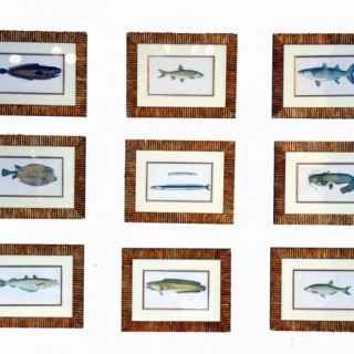 Antique Set Nine 'Couch' Fish Prints