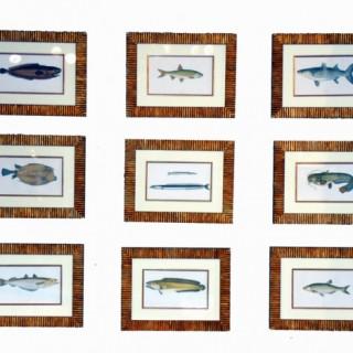 Antique Set Nine 'Couch' Fish Prints