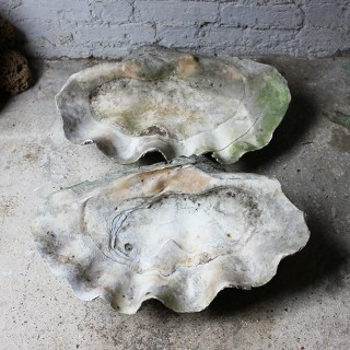 A Fine Pair of Early 20thC Giant Clam Shells