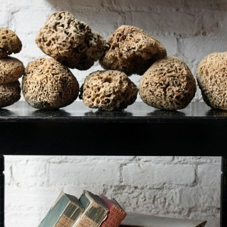 A Beautiful Early 20thC Collection of Nine Porifera/Sponge Specimens