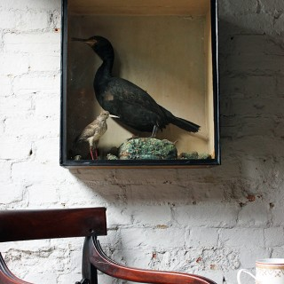 A Late 19thC Taxidermy Study of a Cormorant & Redshank
