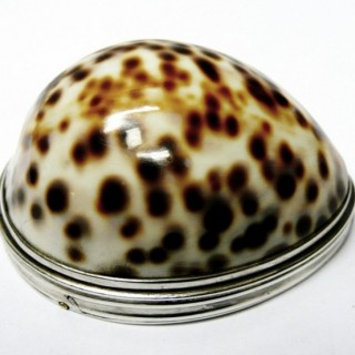 Antique Silver Cowrie Shell Snuff Box