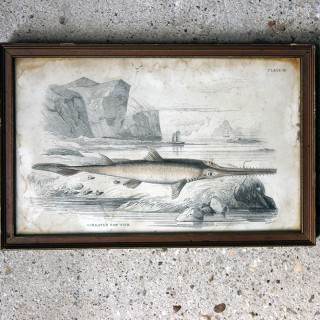 William Home Lizars (1788-1859); A Decorative Group of Twenty Gilt Framed & Hand-Coloured Steel Engravings of Pre-Historic Fish c.1840