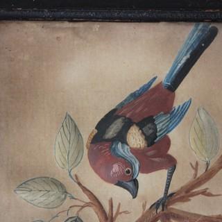 Circle of Samuel Dixon; A Marvellous Trio of Ornithological Embossed Watercolour Studies c.1750-65