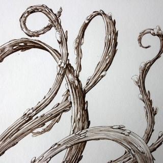 Raphaël Ghislain,b.1928; A Botanical Sepia Ink Study on Paper; The Japanese Dragon Willow
