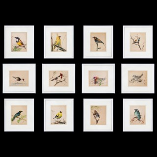 A Set of Twelve 1920s Ornithological Watercolours of Australian Interest