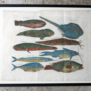 "A Beautiful Group of Five Hand-Coloured Copper Plates of Fish From ""A Collection of Voyages and Travels"" c.1730"