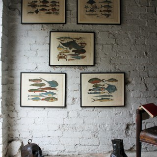 """A Beautiful Group of Five Hand-Coloured Copper Plates of Fish From """"A Collection of Voyages and Travels"""" c.1730"""
