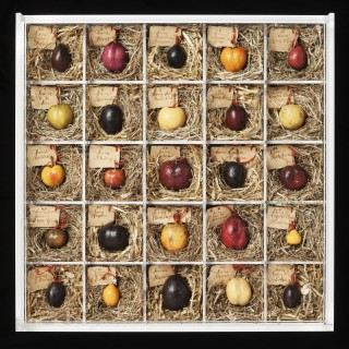 A COLLECTION OF WAX MODELS OF PLUMS