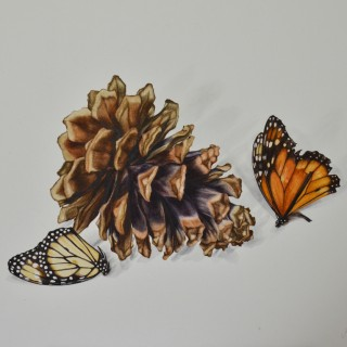 JENNIFER HOOPER (BORN 1982) - CONIFER CONE WITH TWO MONARCH BUTTERFLIES