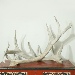 Vintage Taxidermy, Large Antlers.