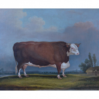 Celebrated Hereford Bull Trojan