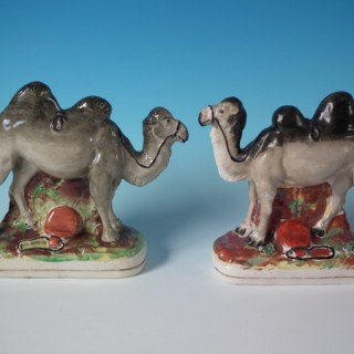 Matched Pair Staffordshire Bactrian camels