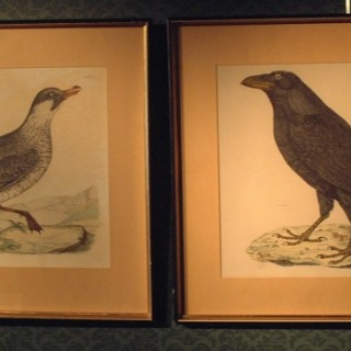 Pair of Early 19th century engravings - one of a skua and one of a raven