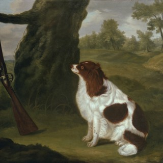 A liver and white spring spaniel sitting by a tree against which leans a flintlock shotgun