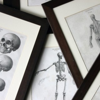 A Splendid Group of Eight Framed Early 19thC Anatomical Copper Plate Engravings; The New Cyclopaedia, London c.1802-08