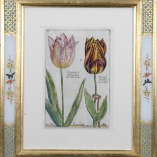 Crispin Van Passe Tulip Engravings