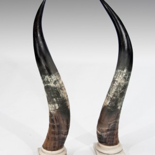 Large Decorative Pair of Antique Marble Mounted Longhorn Steer Horns
