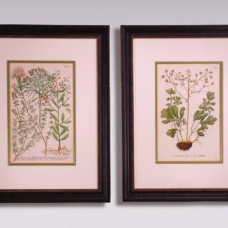A pair of 18th Century Botanical Prints by Johan Wilhelm Weinmann.