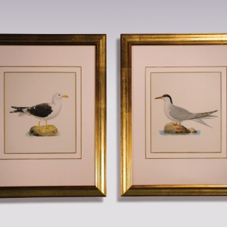 Pair of late 19th century Ornithological Prints by W. V. Wright.