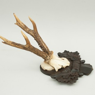 Roebuck Antlers on Black Forrest Carved Shields
