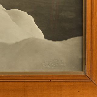 Silver gelatine print of a Weddell seal