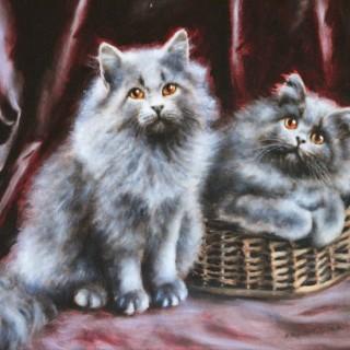 Persian Grey Kittens