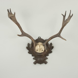 Vintage Taxidermy, Antlers on Shield