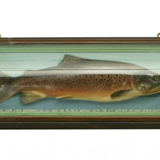 Malloch Brown Trout Trophy Fish Model