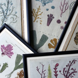A Group of Five Late 18thC Hand-Coloured Engravings of Corals & Seaweed Specimens; c.1790 - 1797