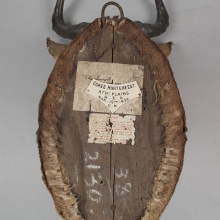 Early Coke's Hartebeest  dated 1909