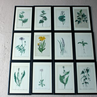 A Group of Twelve Framed Mid-19thC Hand-Coloured Botanical Lithographs c.1864