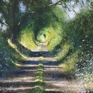 Sunny Path & Shadows