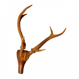 Stag's Head with applied real antlers, France, early 19th century