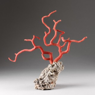 Antique Natural Specimen of a Branch of Red Coral