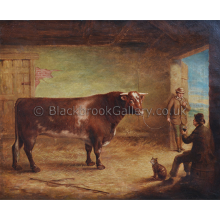 Shorthorn Bull In A Stable