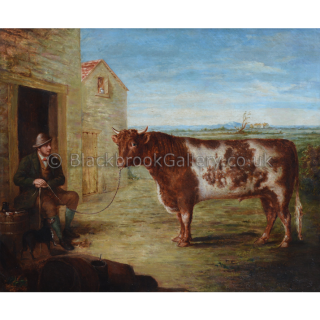 Shorthorn Bull In A Landscape With Stockman