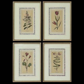 Set of Four Botanical Engravings after Jacques de Sève