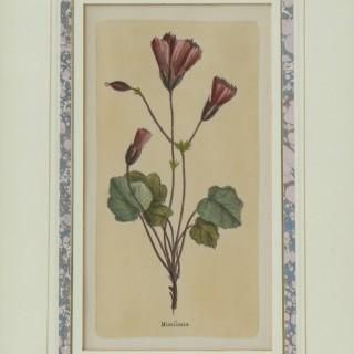 Set of Four Botanical Engravings after Jacques de Sève
