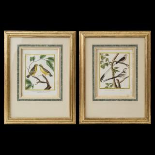 Pair ofEngravings of Birds by François Nicolas Martinet
