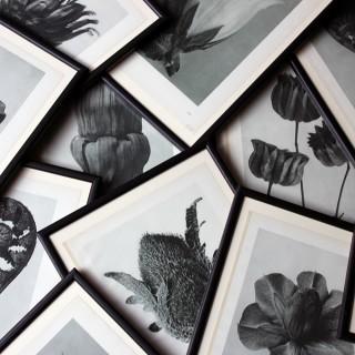 A Group of Twelve Framed Botanical Photogravures by Karl Blossfeldt, Berlin, 1929