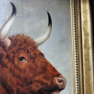 A 19thC English School Study of a Red Poll Bull