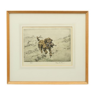 Gun Dog Etching, Henry Wilkinson