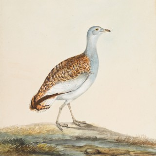 Collection of Fifteen Fine English Ornithological Watercolours