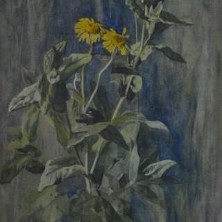 Arthur Wardle - Corn Marigold