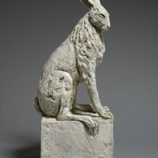 Hare VIII