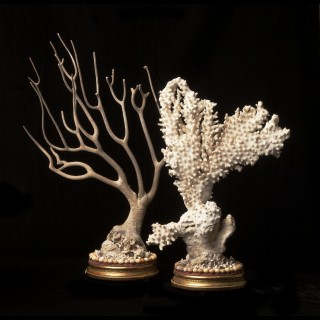 TWO VICTORIAN CORAL SPECIMENS