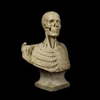 A Rare Vanitas Anatomical Bust